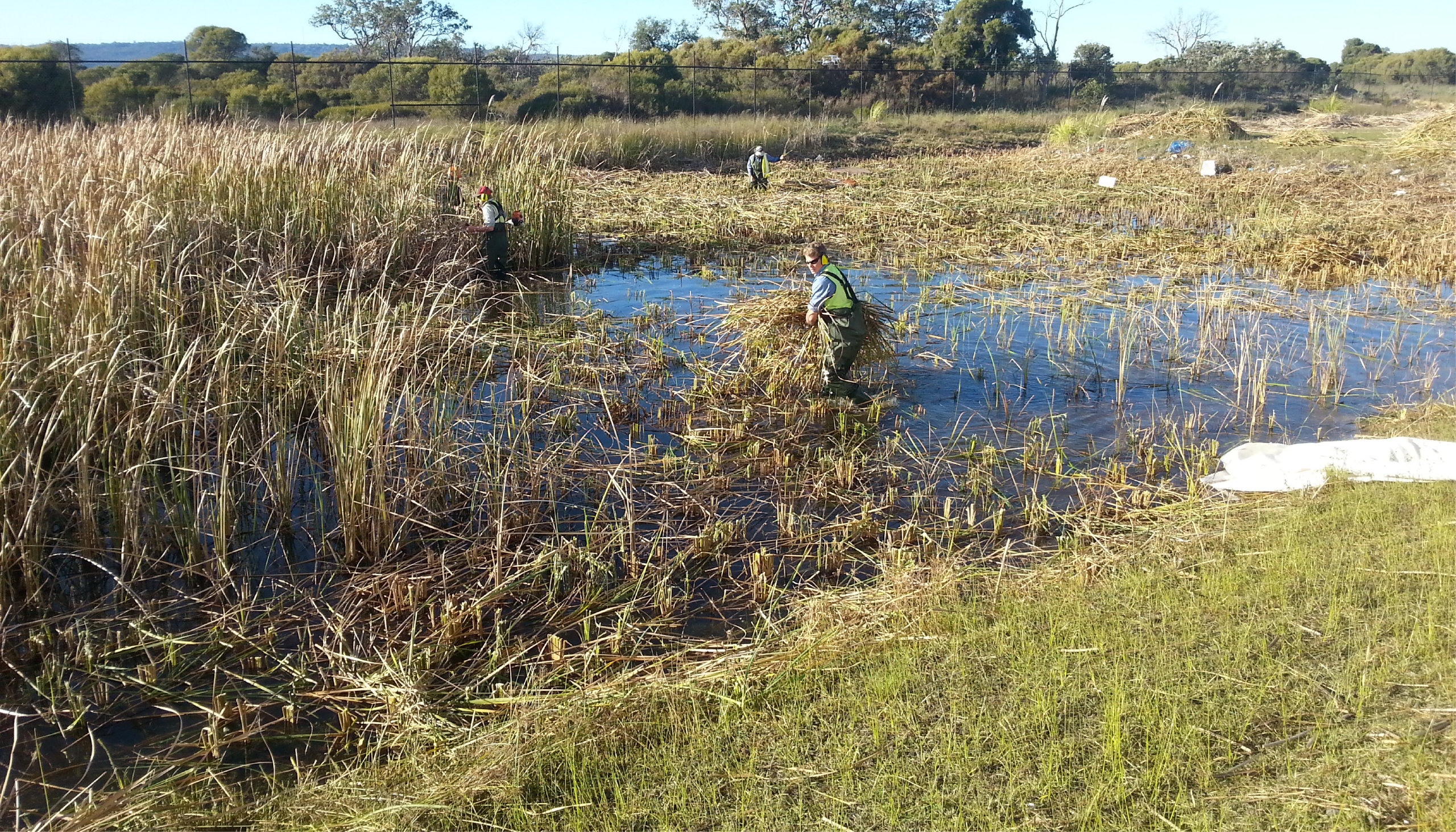 Ross Wylie | Environmental Restoration Supervisor